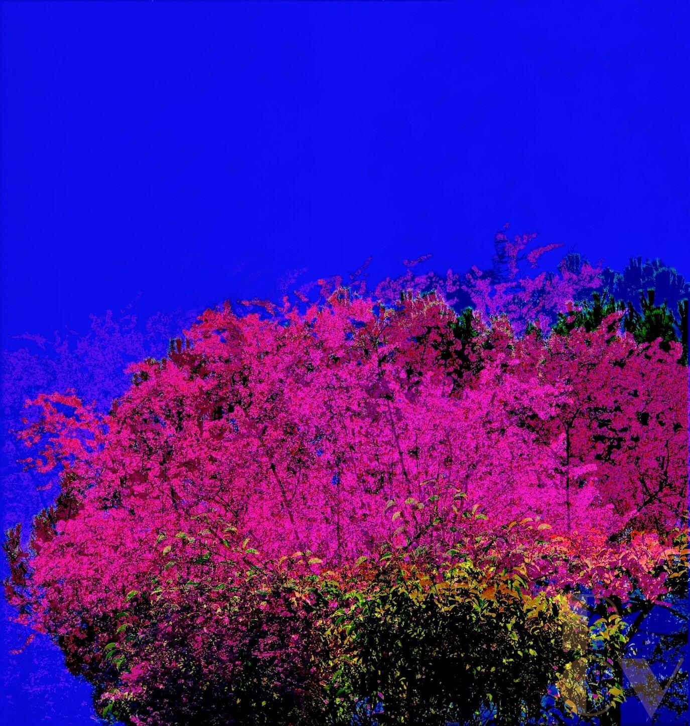 Prunos en Flor 7